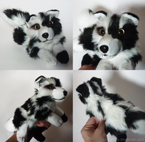 SOLD - Spotted Collie mix - small floppy by goiku