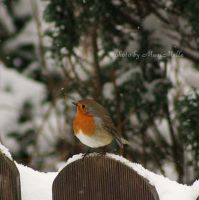 Robin. by MauiMelle
