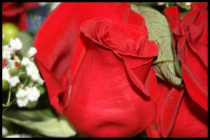 Cancerous Rose. by M-Shell