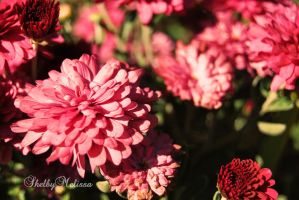 Autumn Pink by ShelbyMelissa
