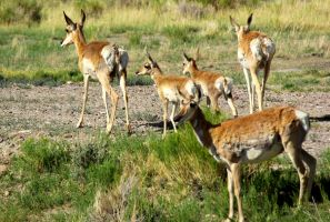Antelope Family 3 by LEXLOTHOR