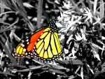 Enhanced butterfly photo by AndehDulac
