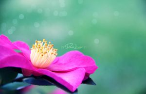 A Magical World.. by danni-louise