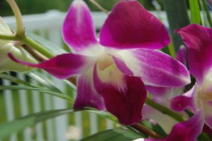 Stock 386 - Orchid by pink-stock