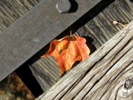 Orange Leaf on the Tracks by Michies-Photographyy