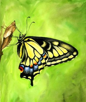 Swallowtail butterfly by Ethan-Carl
