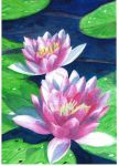 Water Lilly's by Confusedazn822