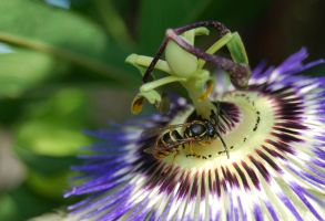Wasp Passion by Faith-giver