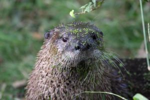 Otter Weed by cycoze