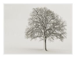Cold by Hartmut-Lerch