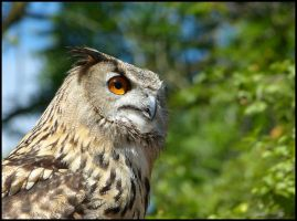 Eurasian eagle owl by Seridon