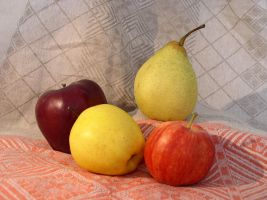 Fruit Composition 16 by SanStock