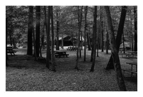 2014-220 The picnickers have all gone home by pearwood