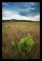 At the Edge of the Grassland by tfavretto