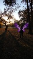 Fairy in the Park Color by pricegotphoto