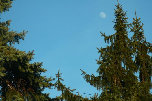 Daytime Moon by backoflove