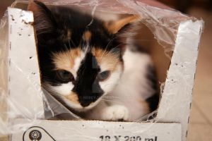 Case of Kitten by Nebey