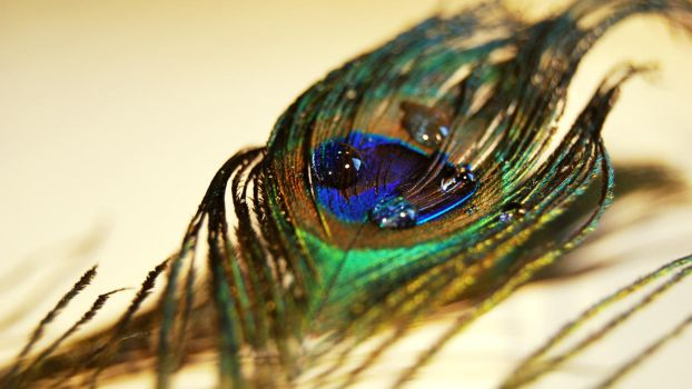 Peacock feather 2 by wntrb
