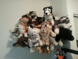 some of my wolf and huskies by xoxoxivoryxoxox