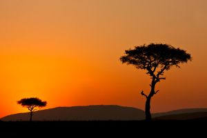 My Africa 47 by catman-suha
