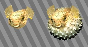 Puffer Fish Recycle Bin Icons by JollyGreenJustin