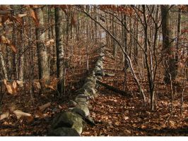 Old Stone Wall by natureguy