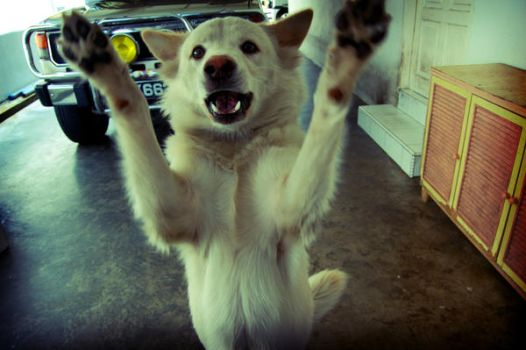 Dog doesn't like Lomography by limecity