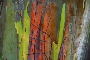 Painted Tree 1 by Niedec-STOCK