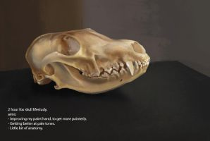 Fox skull by Suzanne-Helmigh