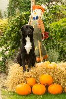Day 282: Posing with Pumpkins by Kaz-D