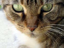 A Cat Named Dog by ammaira