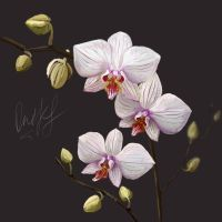 orchid by OOnikSS