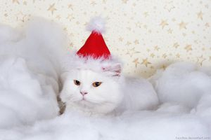 Santa Claws... by hoschie
