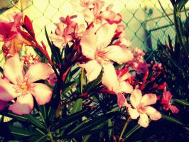 Is This Pink by Autopsyh