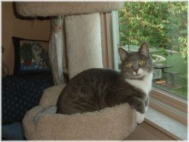 Smokey - Four yrs old by LindaLee