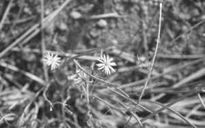 Twigs and Flowers by Zhonaluz