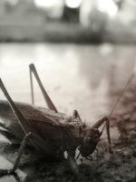grasshopper dissapeard by untitled55