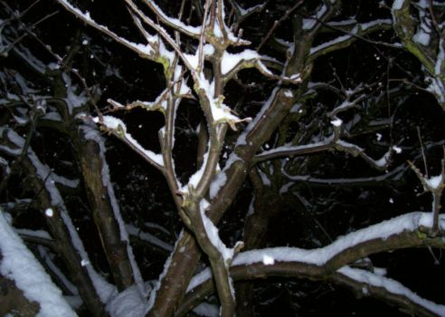 Tree branches in the snow. by missmoody