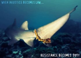 When Injustice Becomes Law... by Immortal-Horse