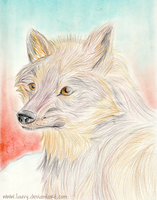 Realistic Wolf by Louvy