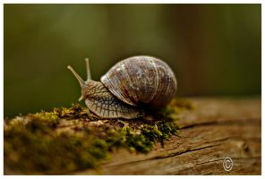 The snail by Satourne