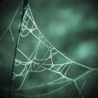 Spider web by meyjan