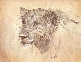 Lioness by Mirianes