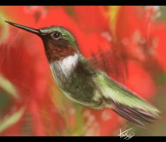 Speed Paint: Humming Bird by JerichoDA