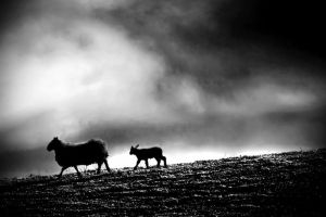 Storm: hurrying home by Coigach