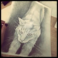 Cat sketch by artfullycreative