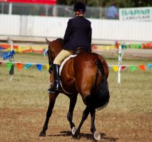 Show bay trt from behind riddn by Chunga-Stock