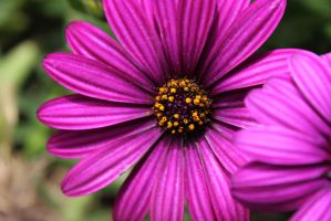 Flower 13 by Thepieholephotograph