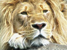 Lion by Sommer-Studios