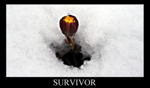 Survivor by BimaFatima